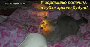 Биоптрон для Домашних Животных